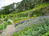 Inverewe Gardens