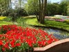 Keukenhof Gardens 2.